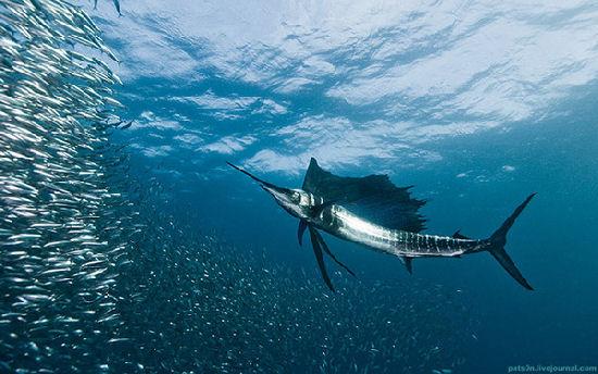 Underwater symphony by Alexander Safonov