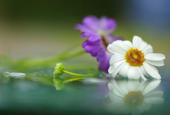 The beauty of nature around us: amazing photography by Tatiana Makushina