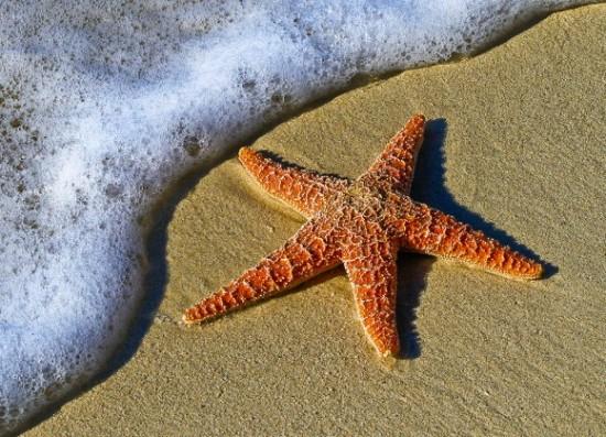 Awesome multicolored starfish (sea stars)