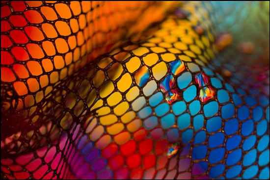 Stunning macro photography by Desi Gramadnikova