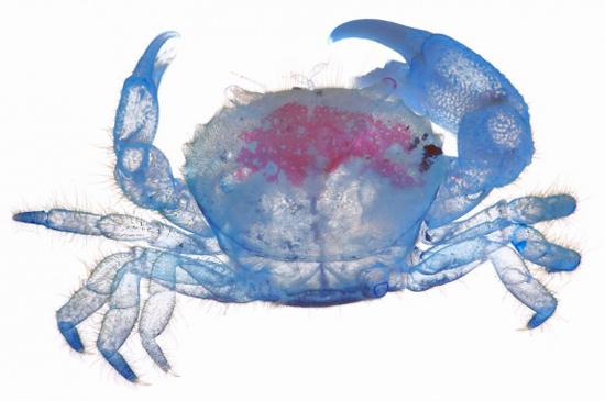 New world transparent specimens by Iori Tomita