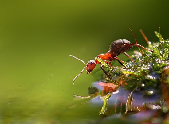 Ants, a new macro story by Vadim Trunov