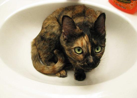 It's a bathtime: sink cats