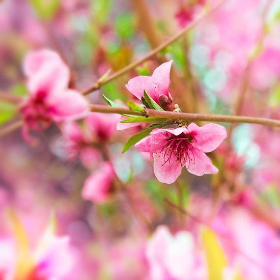 Splendid colors of life, photography by Melina Koumpi