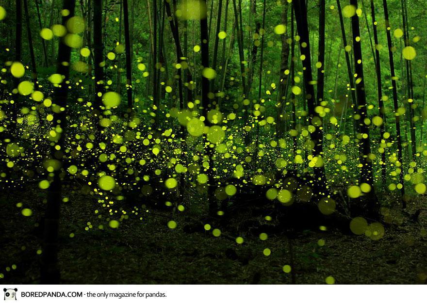 Dream-like long exposure photos of fireflies by Yume Cyan