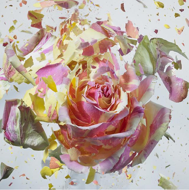 Rapid Bloom, flower explosions series by Martin Klimas