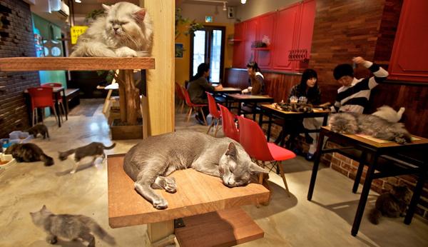 Lady Dinah's Cat Emporium: the first week at the cat café