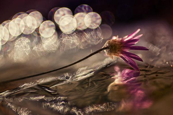 Bokeh - macro photography by Dimitar Lazarov