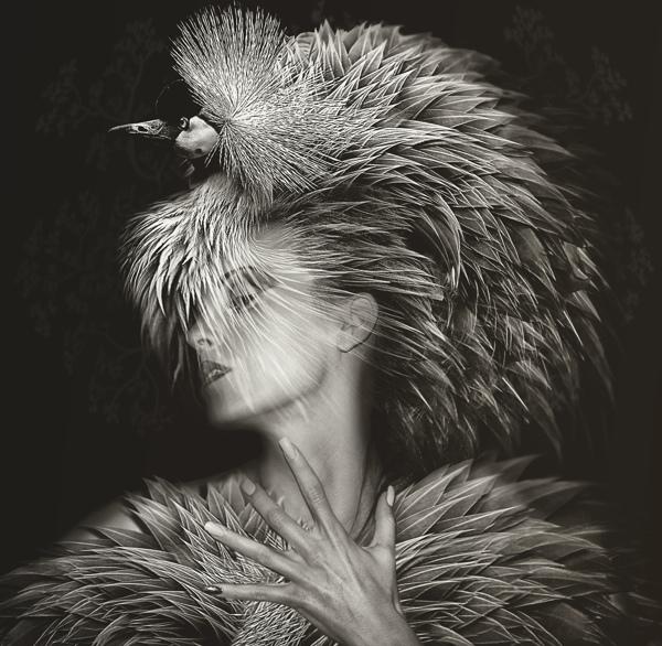 Beauté Aviaire, conceptual fine art prints by Lee Howell