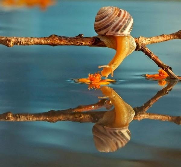 Fascinating miniature world of snails, macro photography by Vyacheslav Mishchenko