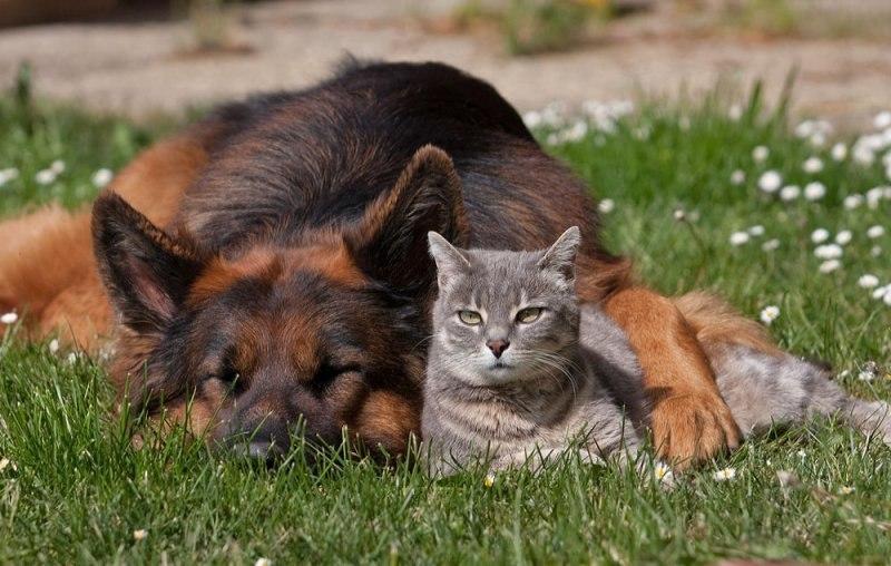 Friendship knows no boundaries