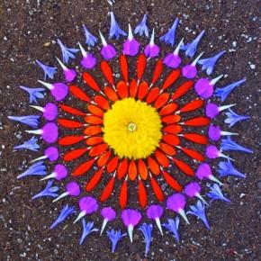 Danmala, flower mandalas by Kathy Klein
