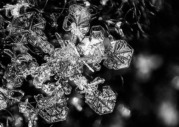 Macro snowflake photos by Josh Shackleford