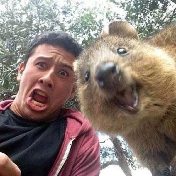 Quokka selfie, cutest trend in Australia right now