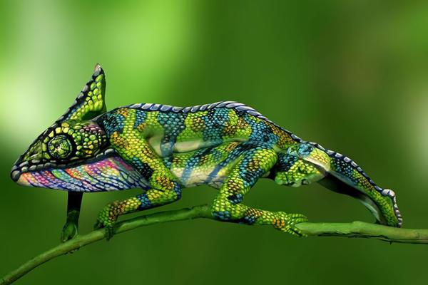 Chameleon - impressive bodypainting by Johannes Stötter