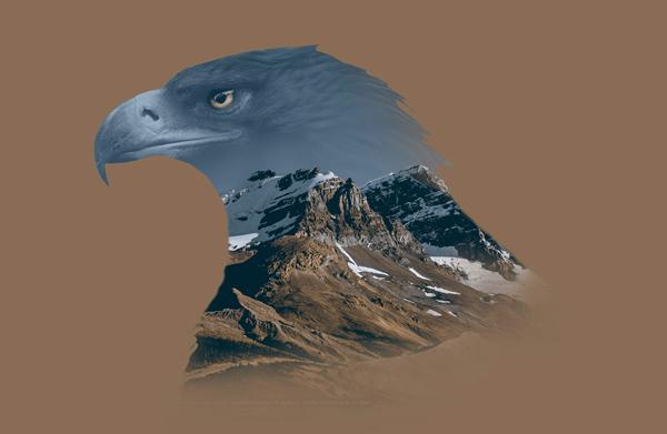 Eagles, illustration by Nir Vana