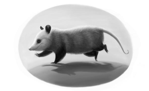 Oswald, illustration by Varya Kolesnikova