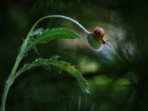 The tiny world of snails, photography by Katarzyna Załużna
