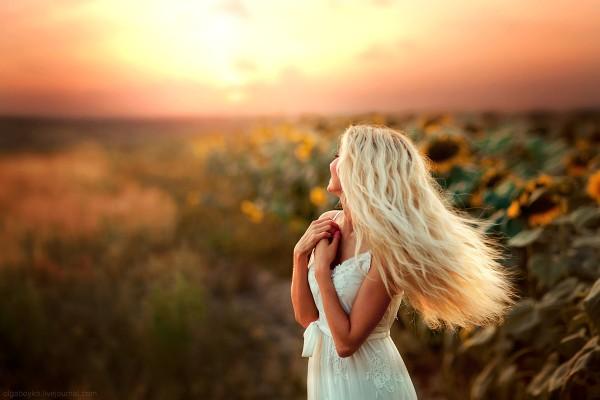 Sunflowers, photography by Olga Boyko