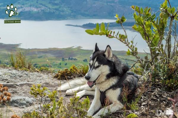Dog Adventure, photography by Danilo Muñoz Ferrer