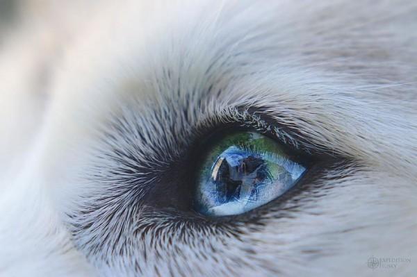 Expedition: Husky - Ellie & Atlas
