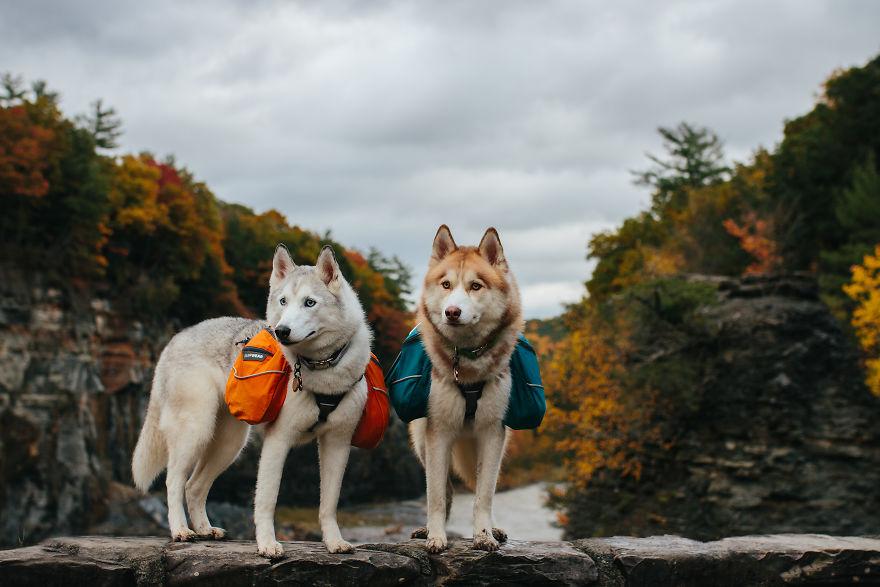 Expedition Husky - Ellie & Atlas
