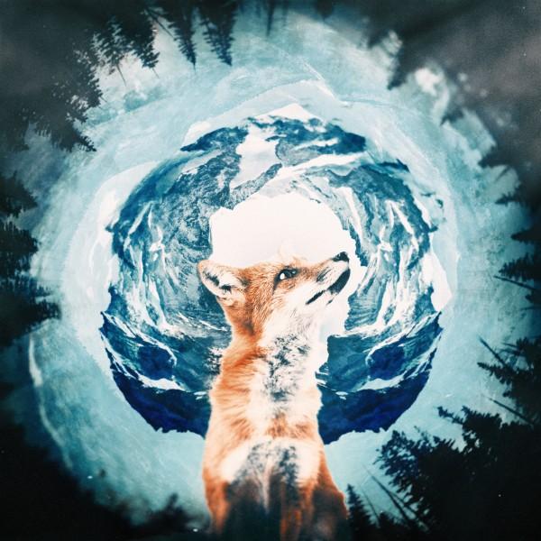 The Wild Iris, digital art, Sedki Alimam, art direction, digital art, retouching, animals, wild, iris, lion, snake, owl, polar bear, onkey, fox, process