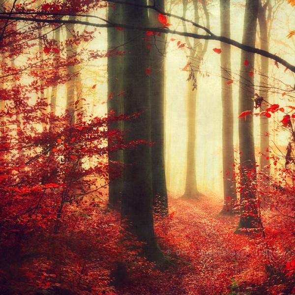 Scarlet Woodlands, digital photography by Dirk Wüstenhagen