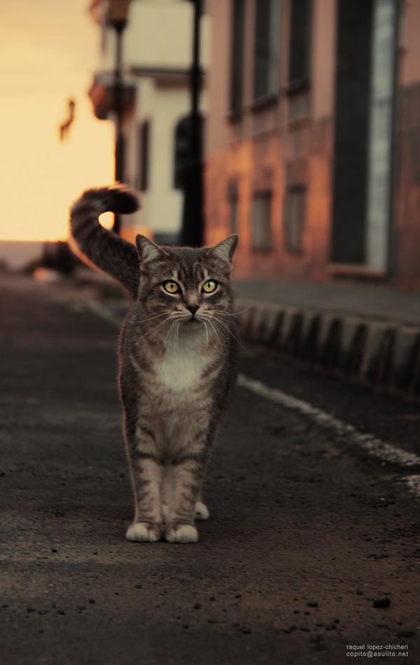 Street cat, photography by Raquel Chicheri
