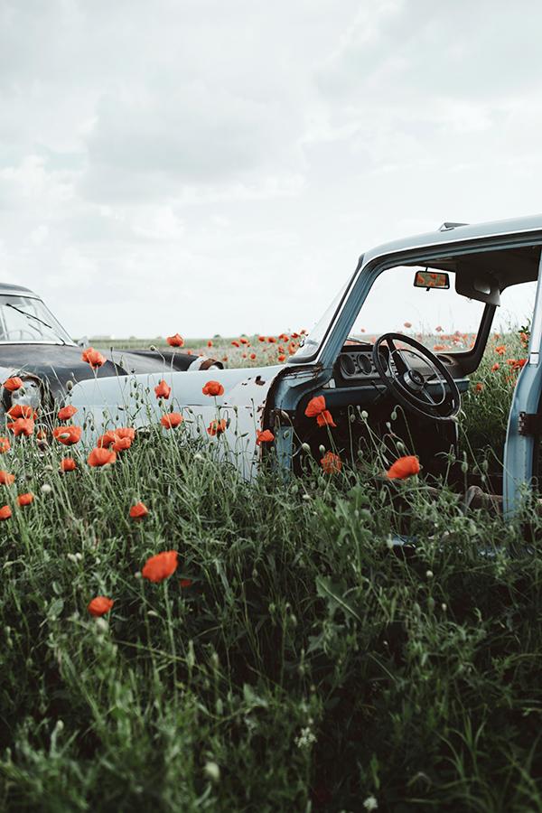 Abandoned car and poppy field, photography by Jovana Rikalo