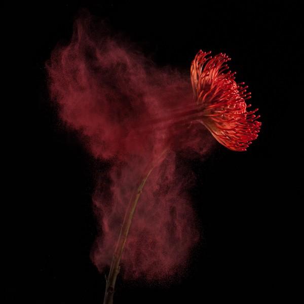 Flower Power, photography by Robert Peek