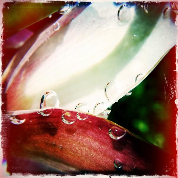 Under the water - Orquidea Cymbidium, photography by Valerio Trabanco