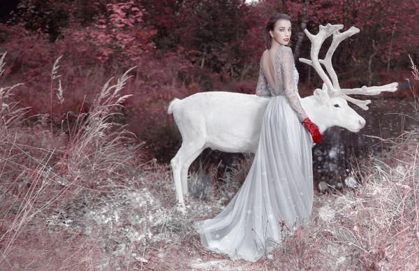 Dear deer, photography by Ilona D. Veresk