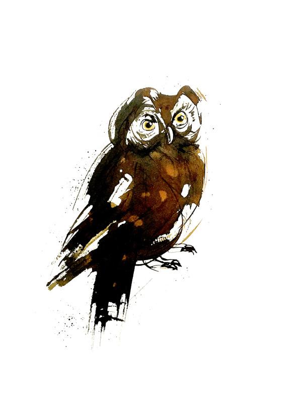 Animal Ink series, illustration by Shraddha Mandale