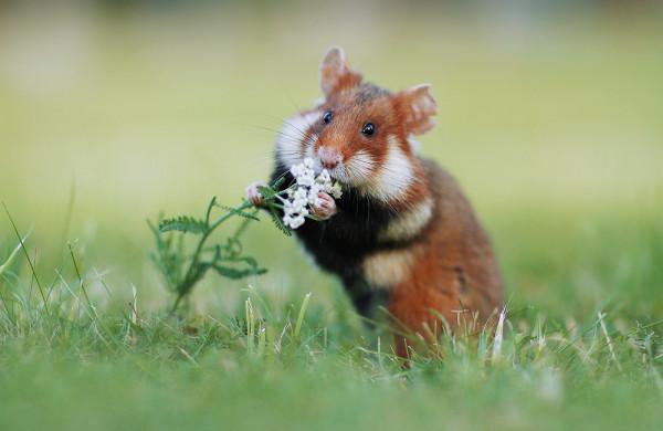 Wildlife photography by Julian Rad