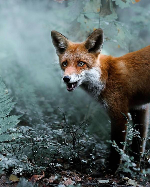 Dreamlike animal portraits by Joachim Munter