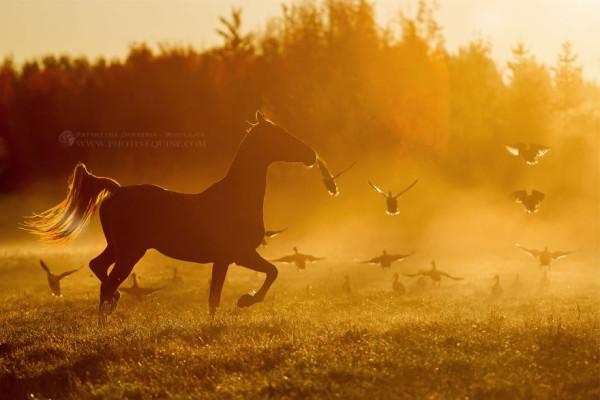 Flight of fancy, photography by Katarzyna Okrzesik-Mikołajek