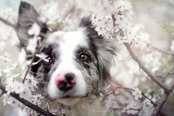 Spring, photography by Martyna Ożóg