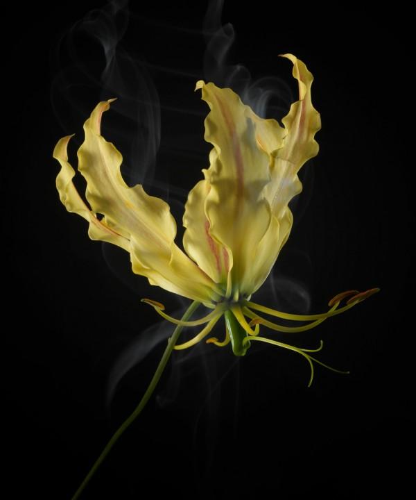 SmokeyFlowers, photography by Robert Peek