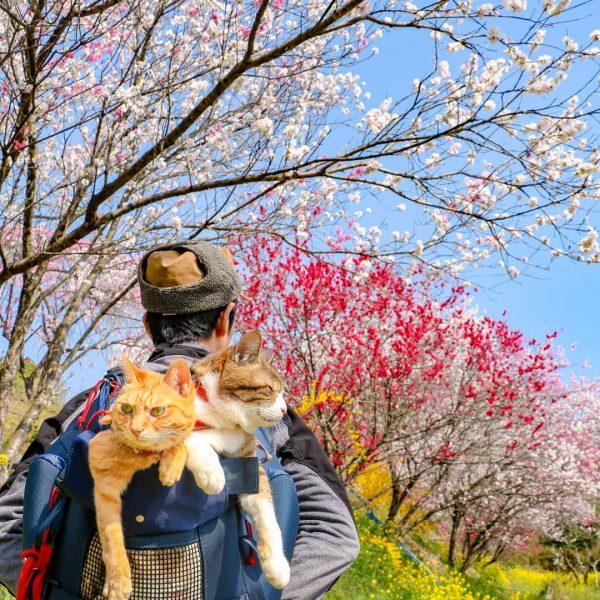 Cats Fuku-Chan and Daikichi find fame travelling around the world