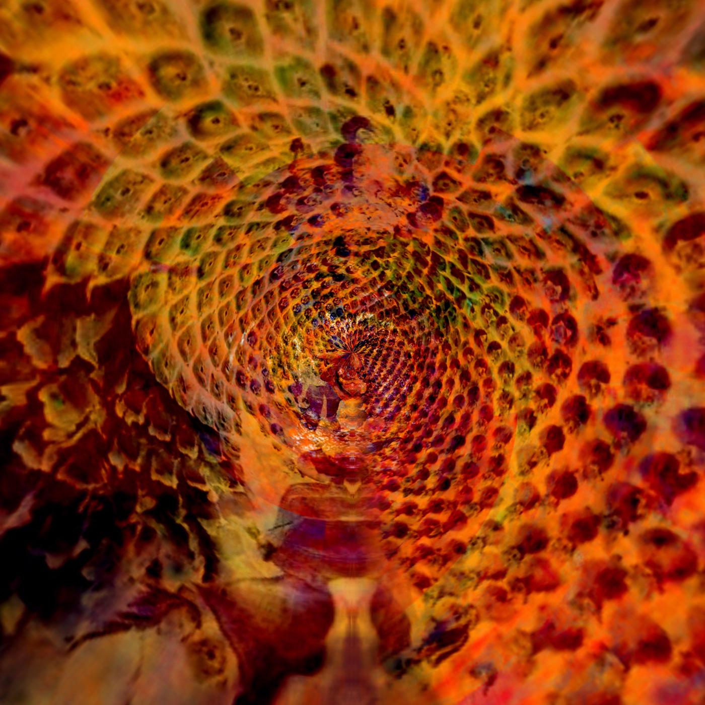 Fibonacci Spiral, digital art by Annette Emannuel