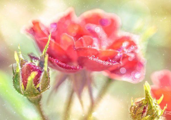 Fantastic flowers photography by Elena Shavlovska