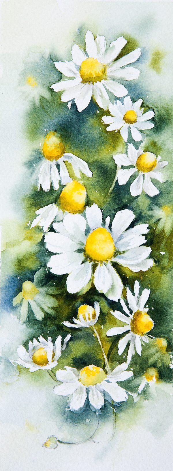 Daisies in watercolor, paintings by Elena Moroz