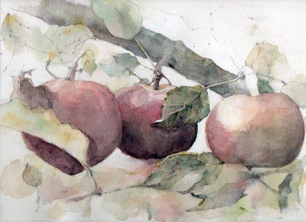 Watercolor studies by Stephanie Tan