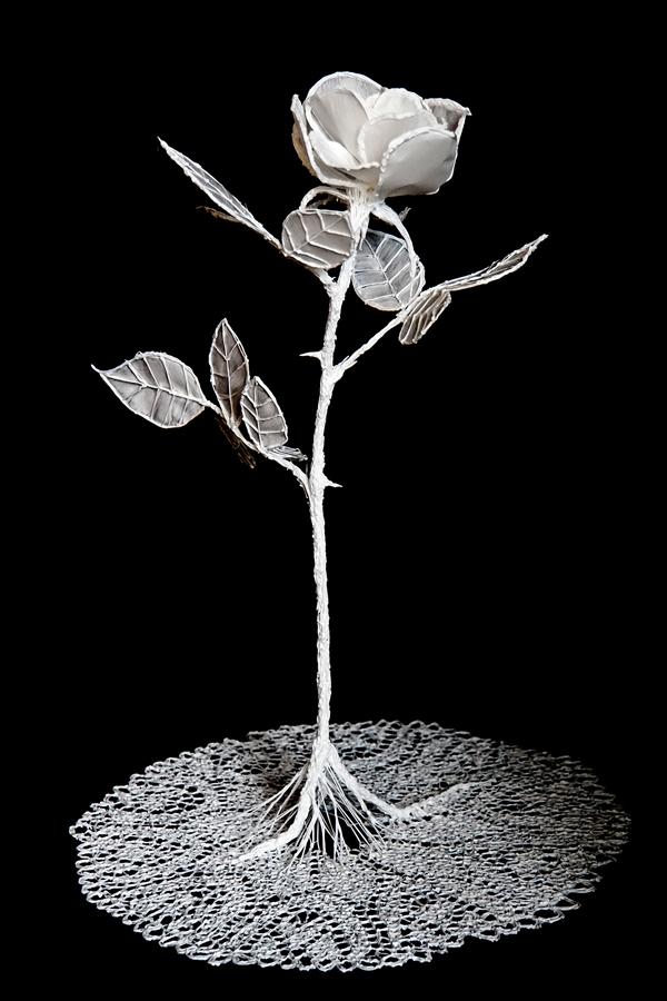 White Rose, fine art by Van Lieshout VI