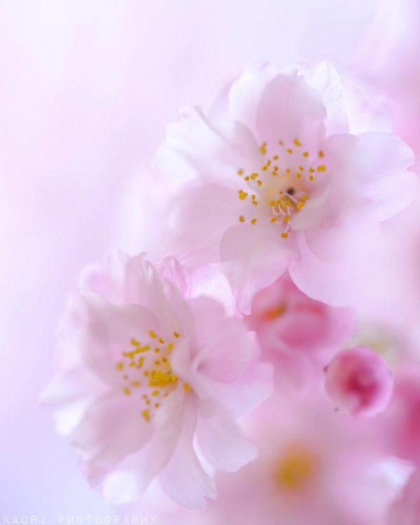 Adorable flower photography by Kaori Hoshimoto