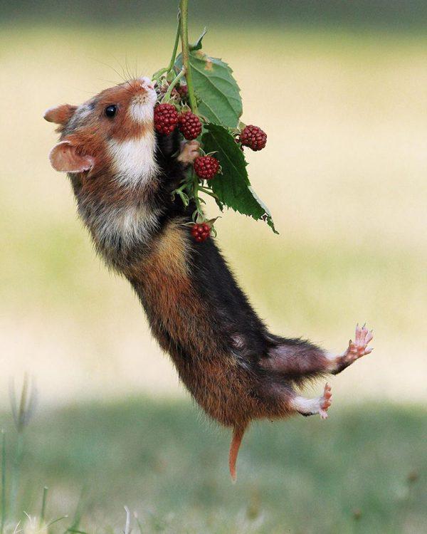 Amusing wildlife shots by Julian Rad