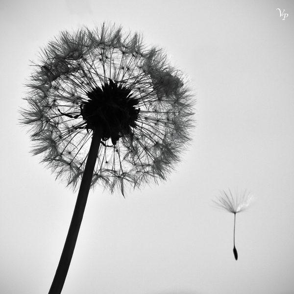 Aussi léger que le vent, photography by Valou Perron