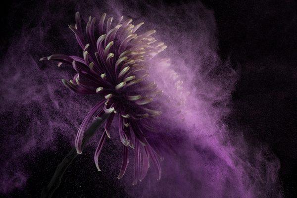 Flower Power II, photography by Robert Peek