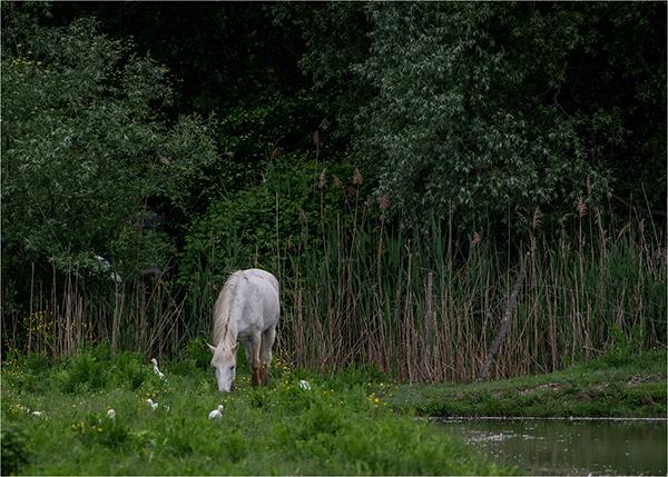 I cavalli dell'Isola della Cona, photography by Paola Bottoni